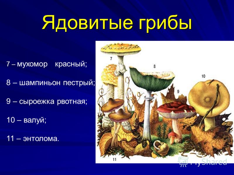 Ядовитые грибы 7 – мухомор красный; 8 – шампиньон пестрый; 9 – сыроежка рвотная; 10 – валуй; 11 – энтолома.