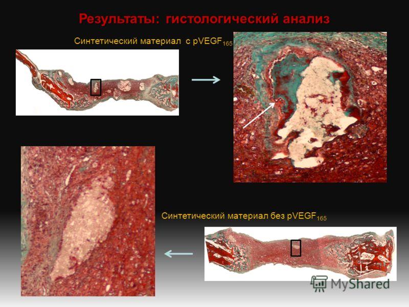 Результаты: гистологический анализ Синтетический материал с pVEGF 165 Синтетический материал без pVEGF 165
