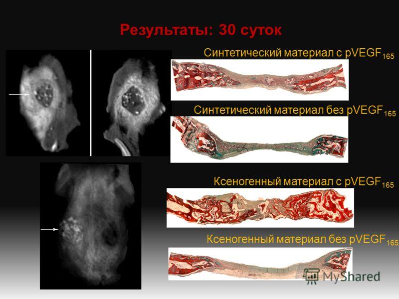 Результаты: 30 суток Синтетический материал с pVEGF 165 Синтетический материал без pVEGF 165 Ксеногенный материал с pVEGF 165 Ксеногенный материал без pVEGF 165