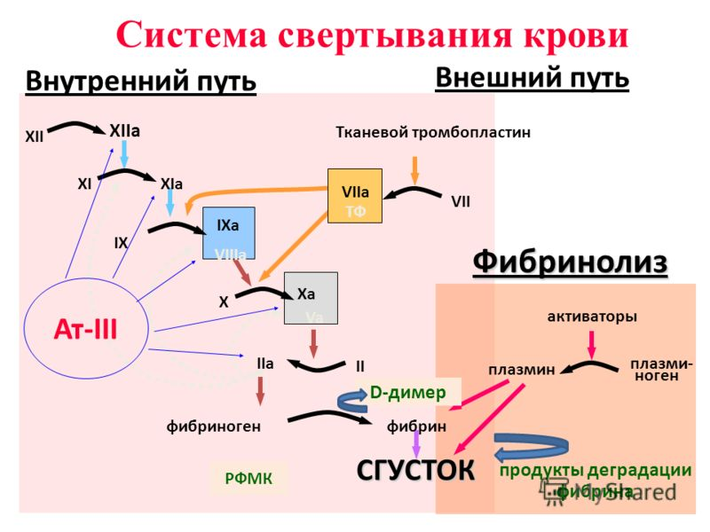 XII XIIa XIXIa IX IXa VIIIa X Xa Va II IIa фибриногенфибринСГУСТОК VII VIIa ТФ Тканевой тромбопластин активаторы плазмин плазми- ноген продукты деградации фибрина Фибринолиз Система свертывания крови Внутренний путь Внешний путь Ат-III РФМК D-димер