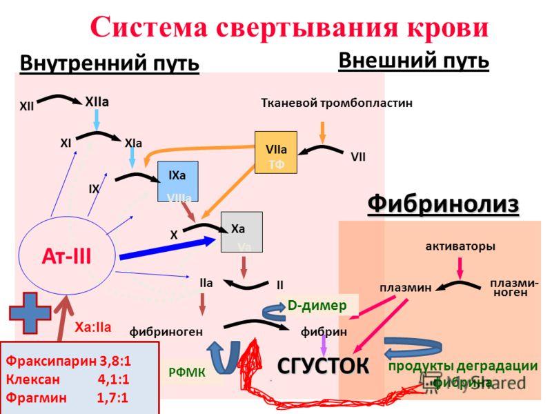 XII XIIa XIXIa IX IXa VIIIa X Xa Va II IIa фибриногенфибринСГУСТОК VII VIIa ТФ Тканевой тромбопластин активаторы плазмин плазми- ноген продукты деградации фибрина Фибринолиз Система свертывания крови Внутренний путь Внешний путь Ат-III ГЕПАРИН Ха:IIа