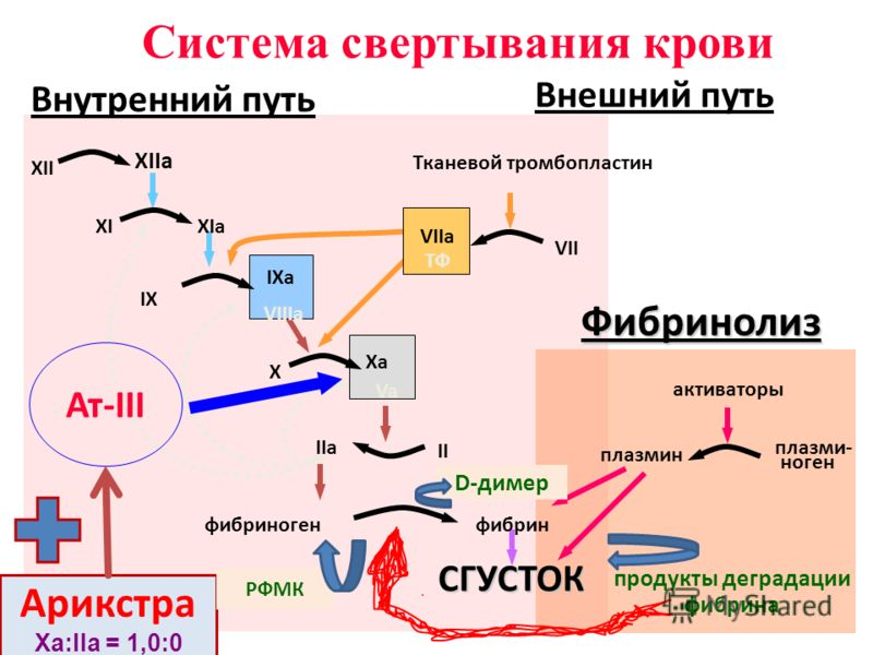 XII XIIa XIXIa IX IXa VIIIa X Xa Va II IIa фибриногенфибринСГУСТОК VII VIIa ТФ Тканевой тромбопластин активаторы плазмин плазми- ноген продукты деградации фибрина Фибринолиз Система свертывания крови Внутренний путь Внешний путь Ат-III Арикстра Ха:II