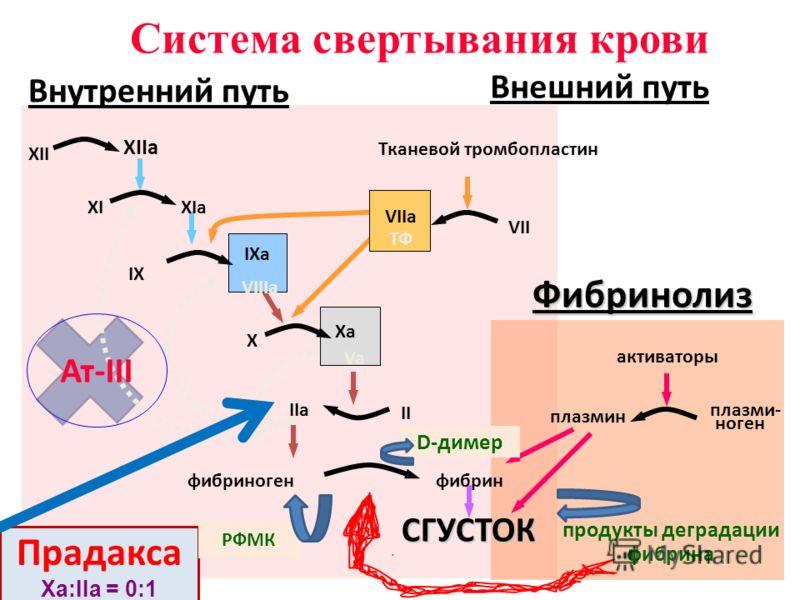 XII XIIa XIXIa IX IXa VIIIa X Xa Va II IIa фибриногенфибринСГУСТОК VII VIIa ТФ Тканевой тромбопластин активаторы плазмин плазми- ноген продукты деградации фибрина Фибринолиз Система свертывания крови Внутренний путь Внешний путь Прадакса Ха:IIа = 0:1
