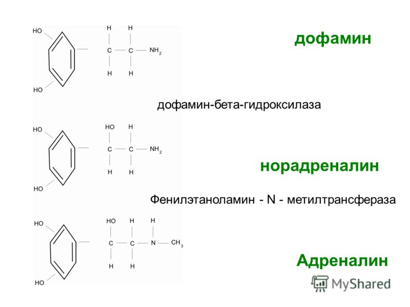 дофамин дофамин-бета-гидроксилаза норадреналин Фенилэтаноламин - N - метилтрансфераза Адреналин