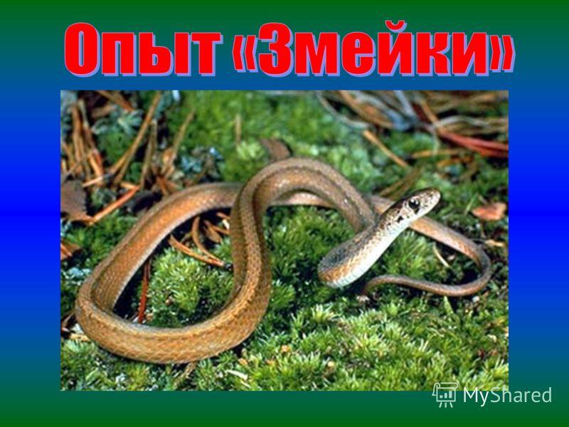 Я еще не то умею, Из песка полезут змеи, Страшные, кусачие. От страха не заплачете?