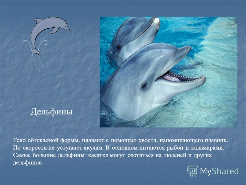 Тело обтекаемой формы, плавают с помощью хвоста, напоминающего плавник. По скорости не уступают акулам. В основном питаются рыбой и кальмарами. Самые большие дельфины - касатки могут охотиться на тюленей и других дельфинов. Дельфины