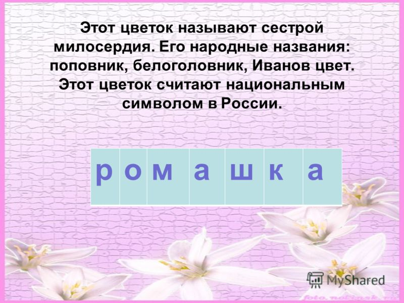 Этот цветок называют сестрой милосердия. Его народные названия: поповник, белоголовник, Иванов цвет. Этот цветок считают национальным символом в России. ромашка