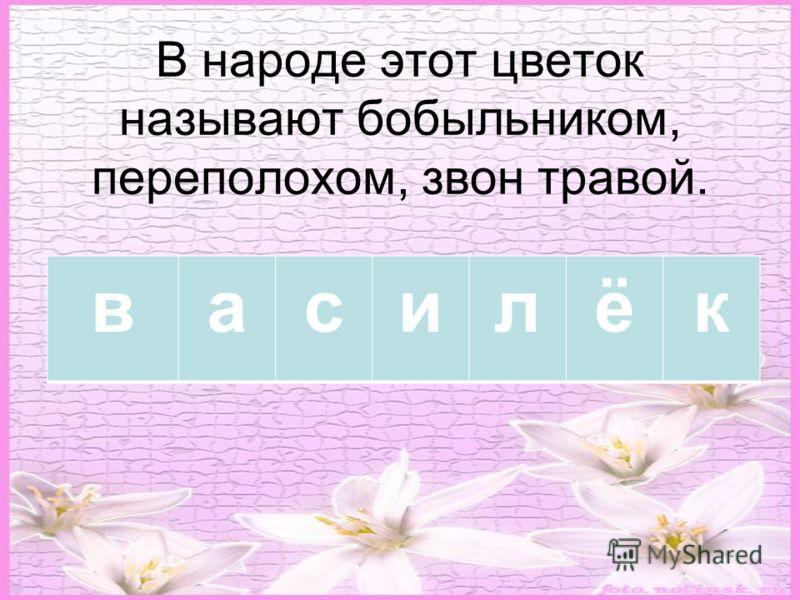 В народе этот цветок называют бобыльником, переполохом, звон травой. василёк