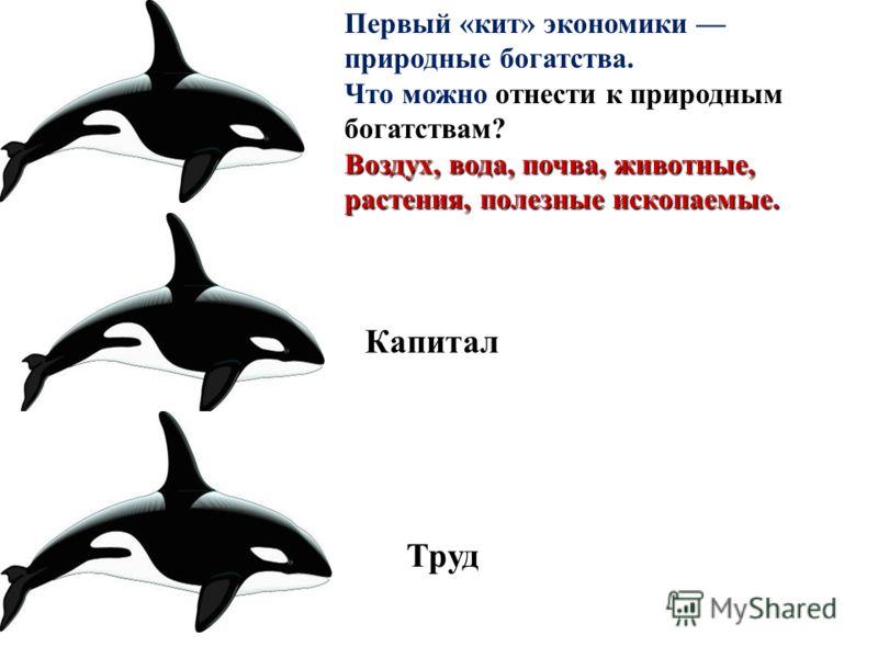 Первый «кит» экономики природные богатства. Что можно отнести к природным богатствам? Воздух, вода, почва, животные, растения, полезные ископаемые. Капитал Труд