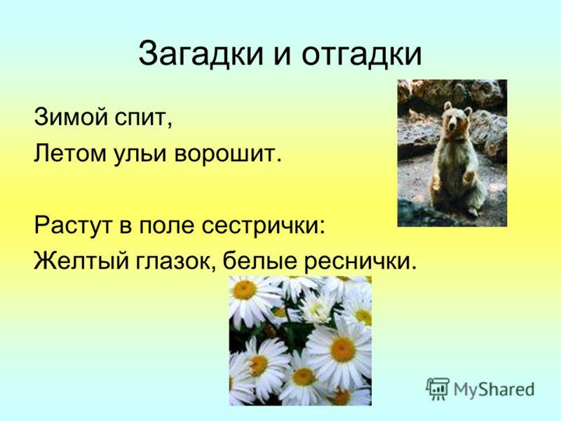 Загадки и отгадки Зимой спит, Летом ульи ворошит. Растут в поле сестрички: Желтый глазок, белые реснички.
