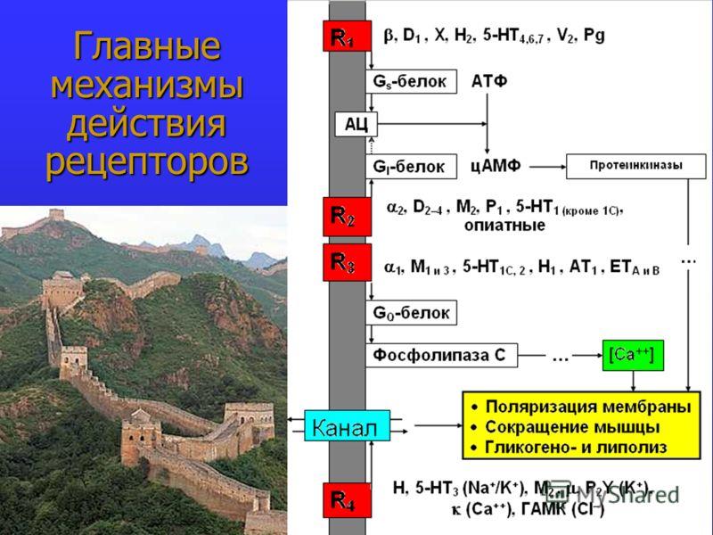Главные механизмы действия рецепторов