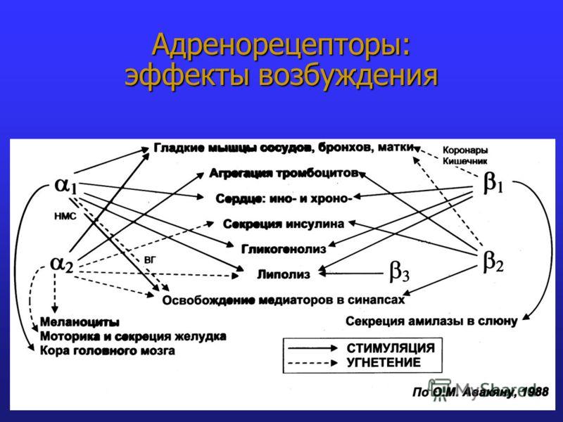 Адренорецепторы: эффекты возбуждения
