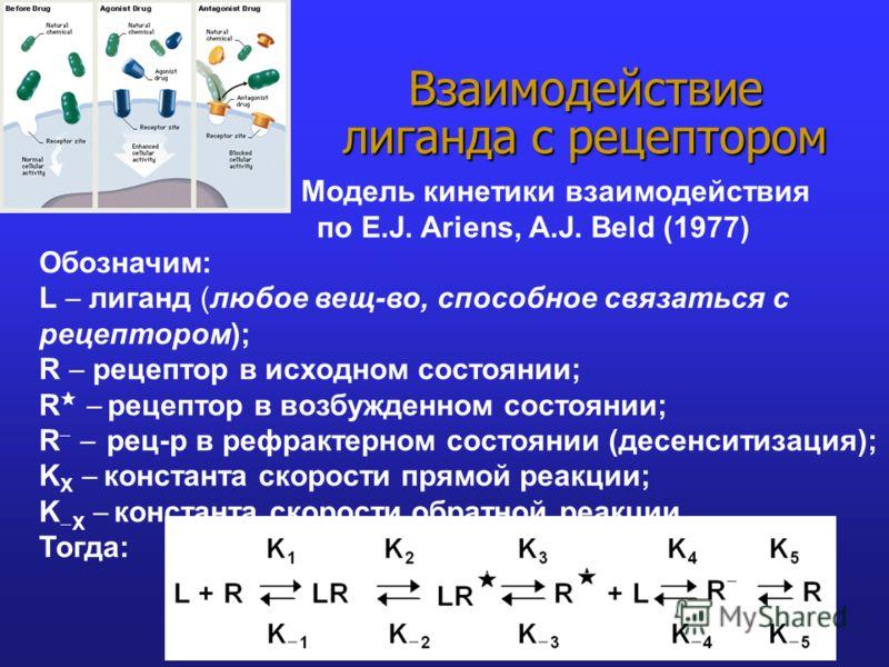 Модель кинетики взаимодействия по E.J. Ariens, A.J. Beld (1977) Обозначим: L лиганд (любое вещ-во, способное связаться с рецептором); R рецептор в исходном состоянии; R рецептор в возбужденном состоянии; R рец-р в рефрактерном состоянии (десенситизац