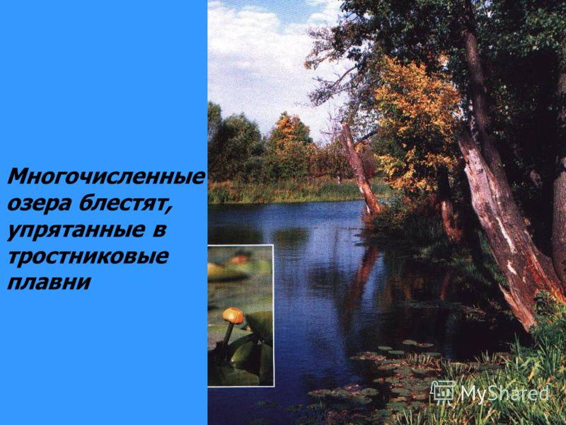 Многочисленные озера блестят, упрятанные в тростниковые плавни