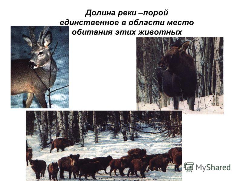 Долина реки –порой единственное в области место обитания этих животных