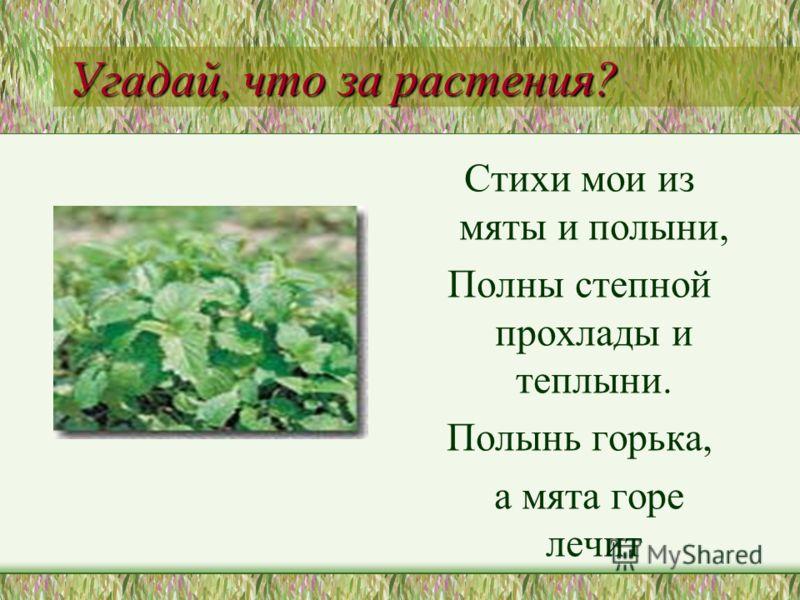Угадай, что за растения? Стихи мои из мяты и полыни, Полны степной прохлады и теплыни. Полынь горька, а мята горе лечит