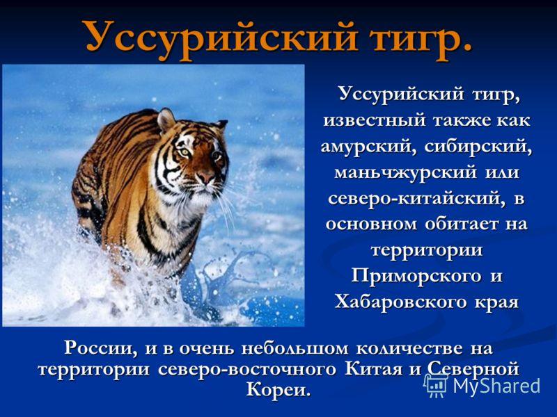 Уссурийский тигр. Уссурийский тигр, известный также как амурский, сибирский, маньчжурский или северо-китайский, в основном обитает на территории Приморского и Хабаровского края Уссурийский тигр, известный также как амурский, сибирский, маньчжурский и