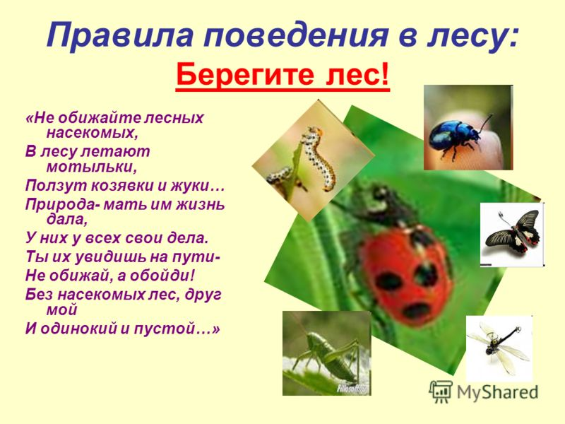 Правила поведения в лесу: Берегите лес! «Не обижайте лесных насекомых, В лесу летают мотыльки, Ползут козявки и жуки… Природа- мать им жизнь дала, У них у всех свои дела. Ты их увидишь на пути- Не обижай, а обойди! Без насекомых лес, друг мой И одино