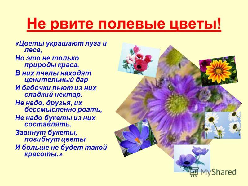 Не рвите полевые цветы! «Цветы украшают луга и леса, Но это не только природы краса, В них пчелы находят ценительный дар И бабочки пьют из них сладкий нектар. Не надо, друзья, их бессмысленно рвать, Не надо букеты из них составлять. Завянут букеты, п