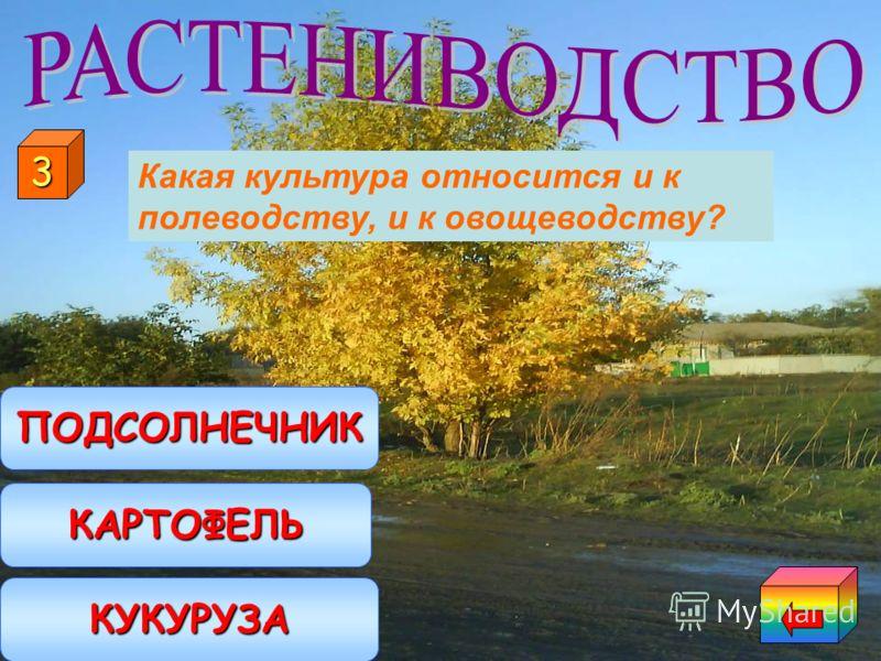 Выращивание плодовых культур Выращивание овощных культур Выращивание полевых культур 2 Что такое плодоводство?
