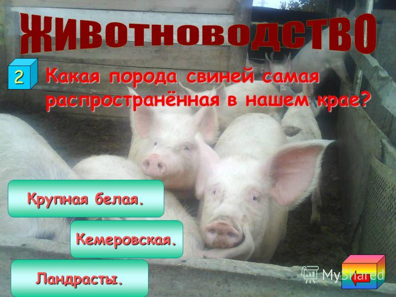 Какая отрасль животноводства не развита в нашем посёлке? КОНЕВОДСТВО ПТИЦЕВОДСТВО СВИНОВОДСТВО 1
