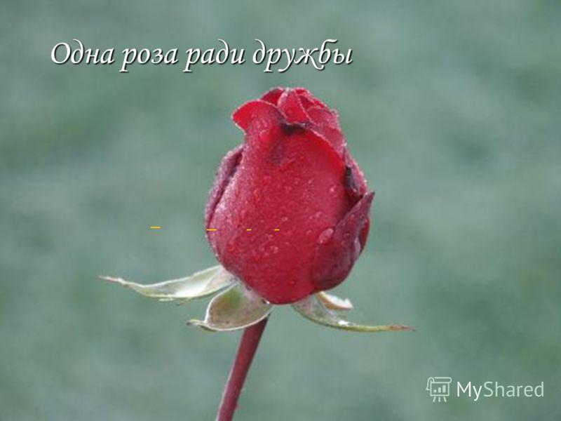 Одна роза ради дружбы