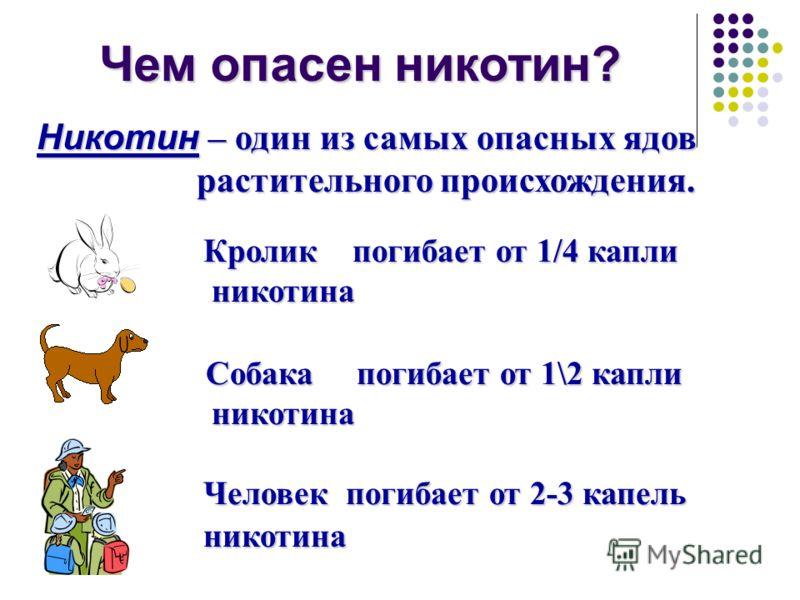 Чем опасен никотин? Никотин – один из самых опасных ядов растительного происхождения. растительного происхождения. Кролик погибает от 1/4 капли Кролик погибает от 1/4 капли никотина никотина Собака погибает от 1\2 капли Собака погибает от 1\2 капли н