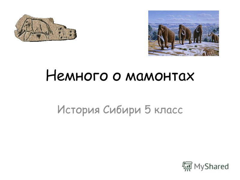 Немного о мамонтах История Сибири 5 класс