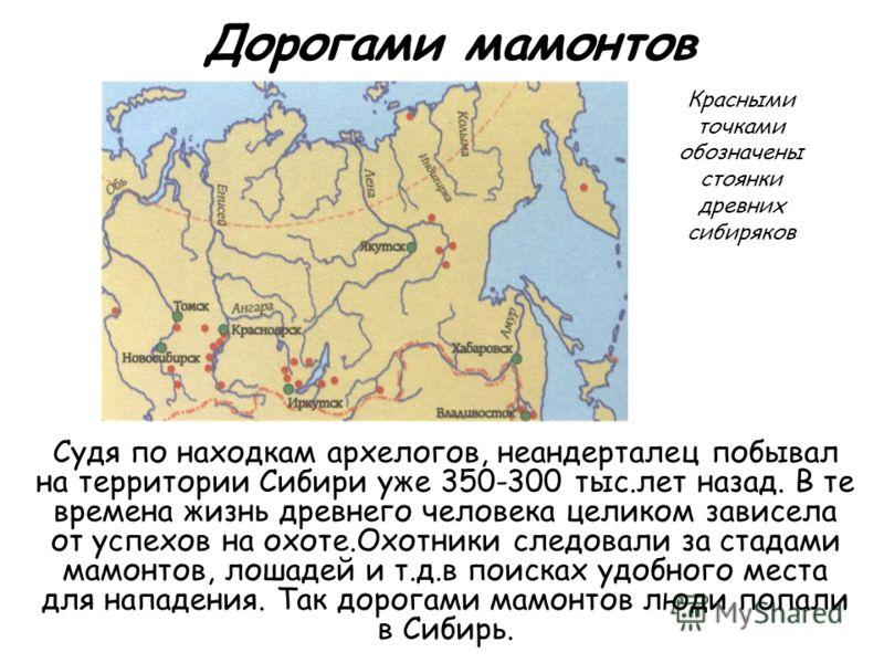 Дорогами мамонтов Судя по находкам архелогов, неандерталец побывал на территории Сибири уже 350-300 тыс.лет назад. В те времена жизнь древнего человека целиком зависела от успехов на охоте.Охотники следовали за стадами мамонтов, лошадей и т.д.в поиск