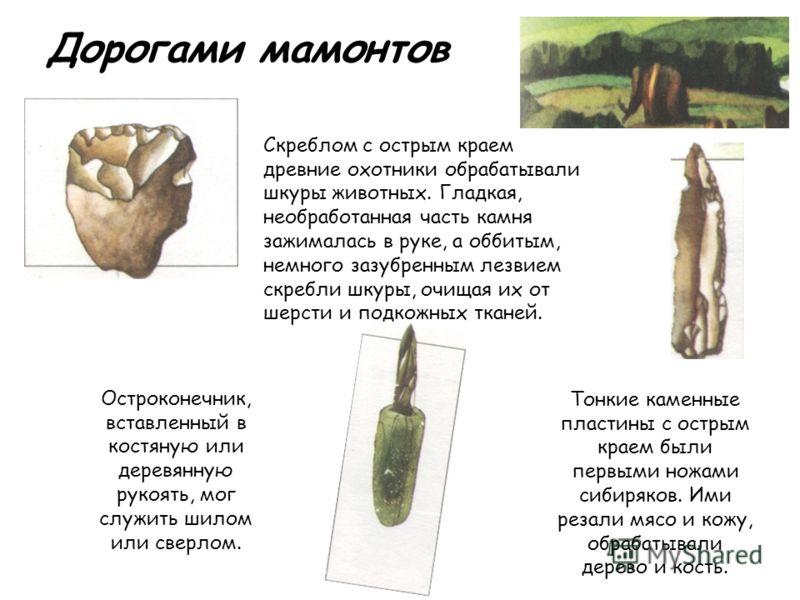 Дорогами мамонтов Скреблом с острым краем древние охотники обрабатывали шкуры животных. Гладкая, необработанная часть камня зажималась в руке, а оббитым, немного зазубренным лезвием скребли шкуры, очищая их от шерсти и подкожных тканей. Остроконечник
