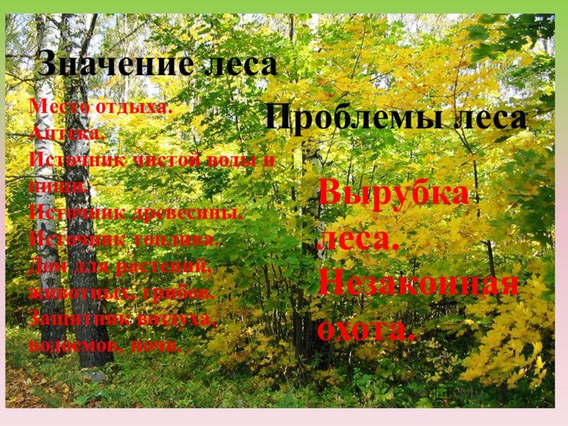 Значение леса Место отдыха. Аптека. Источник чистой воды и пищи. Источник древесины. Источник топлива. Дом для растений, животных, грибов. Защитник воздуха, водоемов, почв. Проблемы леса Вырубка леса. Незаконная охота.