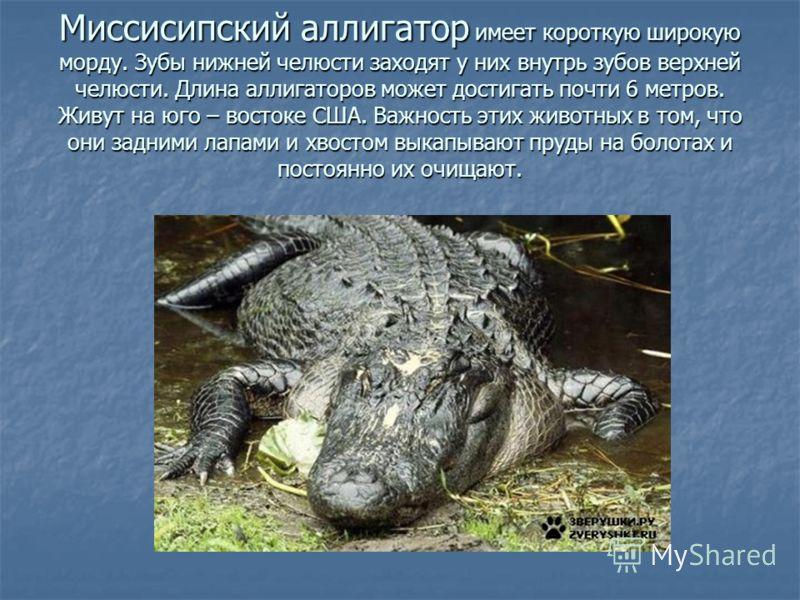 Животные отряд крокодилы класс