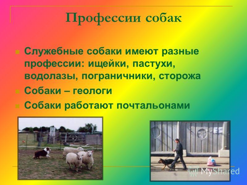 Профессии собак Служебные собаки имеют разные профессии: ищейки, пастухи, водолазы, пограничники, сторожа Собаки – геологи Собаки работают почтальонами