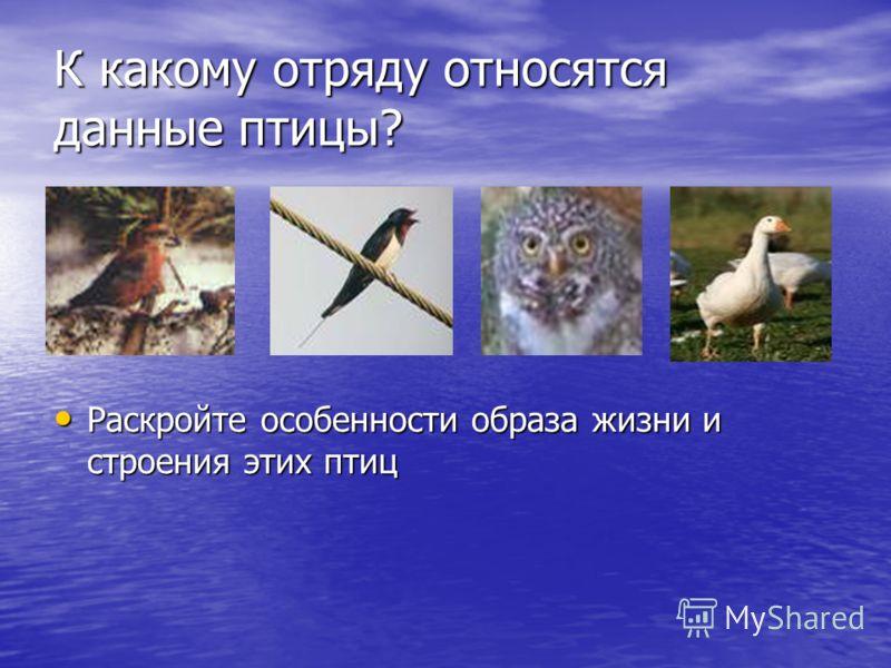 К какому отряду относятся данные птицы? Раскройте особенности образа жизни и строения этих птиц Раскройте особенности образа жизни и строения этих птиц