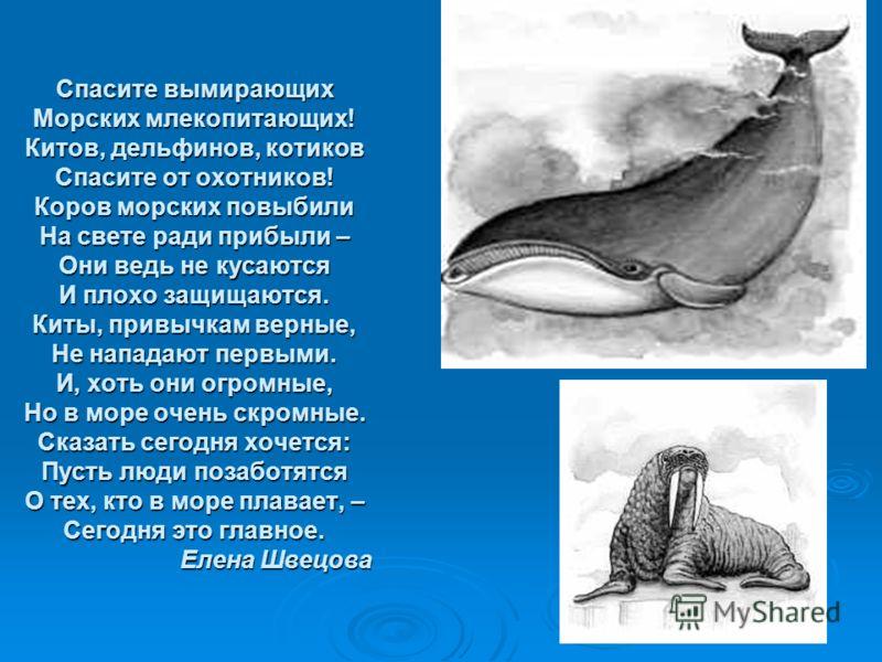 Спасите вымирающих Морских млекопитающих! Китов, дельфинов, котиков Спасите от охотников! Коров морских повыбили На свете ради прибыли – Они ведь не кусаются И плохо защищаются. Киты, привычкам верные, Не нападают первыми. И, хоть они огромные, Но в
