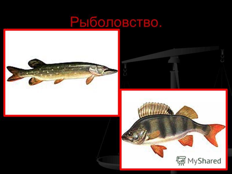 Рыболовство.