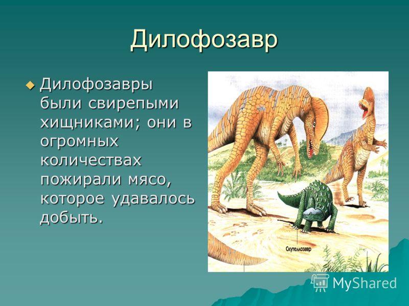 Стегозавр Длина тела стегозавра достигала 9 метров, ноги у него были толстые и короткие. Несмотря на довольно страшный вид стегозавров, временами им приходилось защищаться от нападения свирепых хищников. Длина тела стегозавра достигала 9 метров, ноги