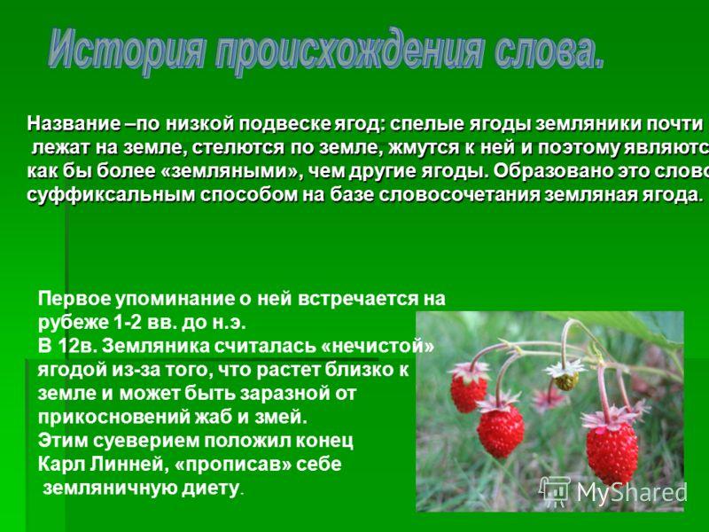 Название –по низкой подвеске ягод: спелые ягоды земляники почти лежат на земле, стелются по земле, жмутся к ней и поэтому являются лежат на земле, стелются по земле, жмутся к ней и поэтому являются как бы более «земляными», чем другие ягоды. Образова