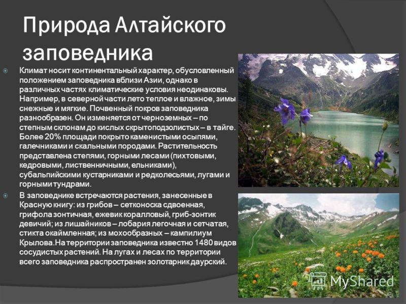 Расположение и история Алтайского заповедника Заповедник официально создан в 1932 г., хотя необходимость его создания была с 1920 г. Почти 12 лет правительство страны не могло определиться с размерами территории заповедника, в итоге фактическая его п
