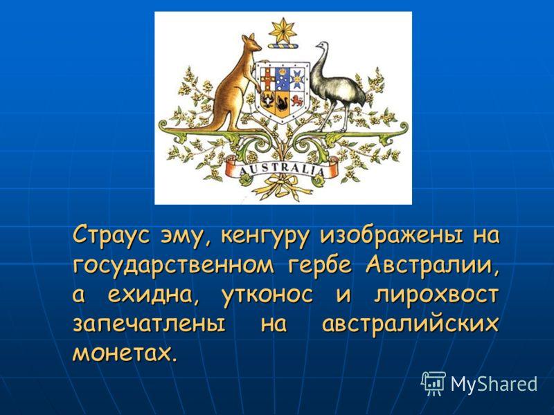 Страус эму, кенгуру изображены на государственном гербе Австралии, а ехидна, утконос и лирохвост запечатлены на австралийских монетах.
