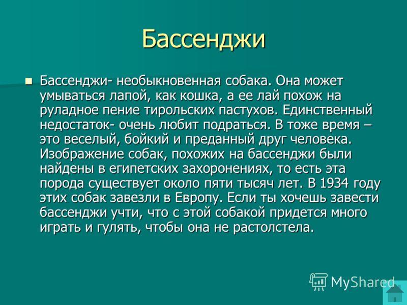 Бассенджи Бассенджи- необыкновенная собака. Она может умываться лапой, как кошка, а ее лай похож на руладное пение тирольских пастухов. Единственный недостаток- очень любит подраться. В тоже время – это веселый, бойкий и преданный друг человека. Изоб