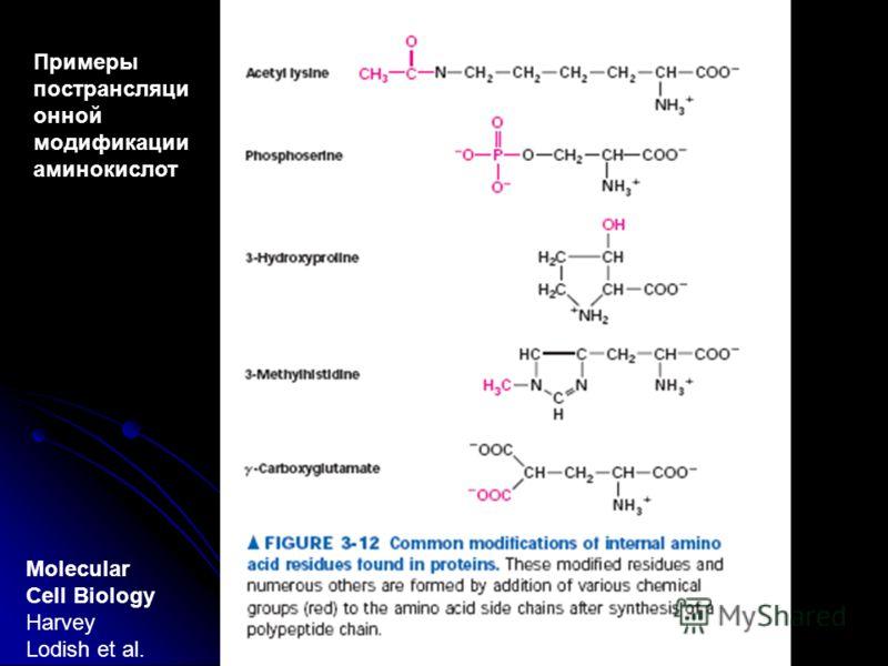 Molecular Cell Biology Harvey Lodish et al. Примеры пострансляци онной модификации аминокислот