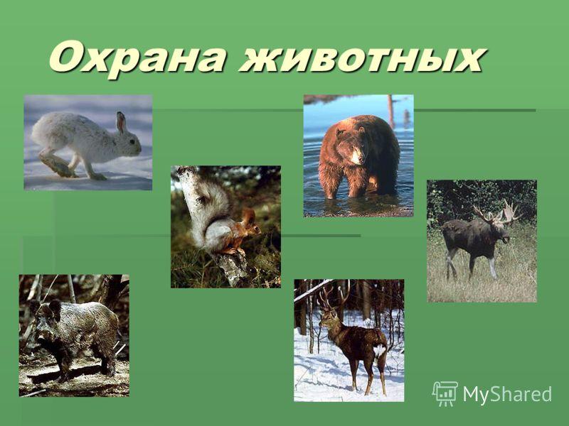 Реферат на тему размножение и развитие животных 3 класс