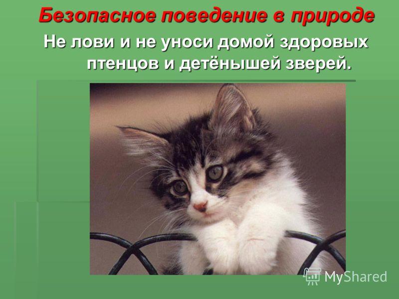 Безопасное поведение в природе Не лови и не уноси домой здоровых птенцов и детёнышей зверей.