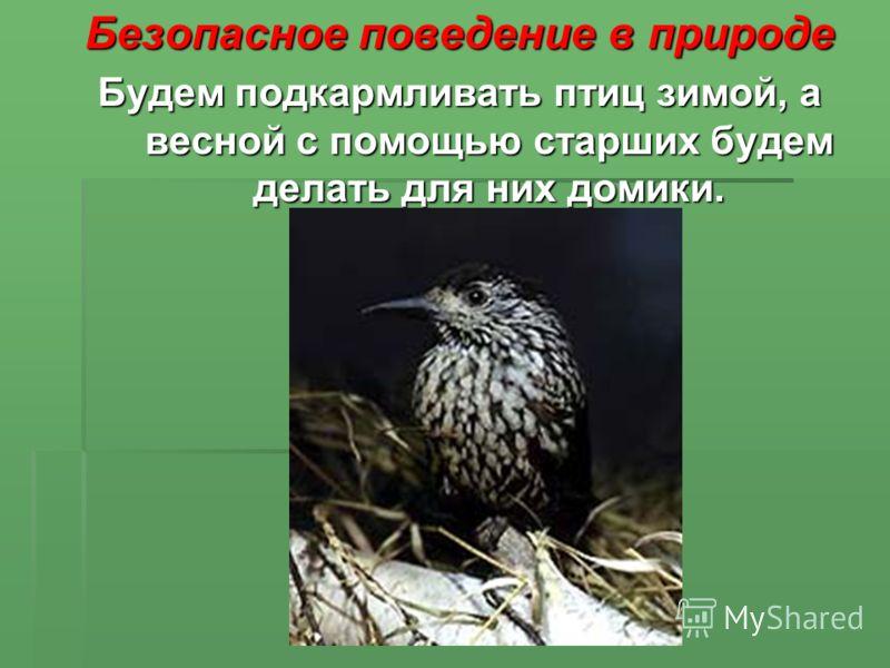 Безопасное поведение в природе Будем подкармливать птиц зимой, а весной с помощью старших будем делать для них домики.