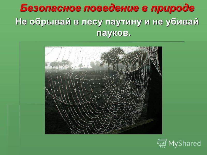 Безопасное поведение в природе Не обрывай в лесу паутину и не убивай пауков.