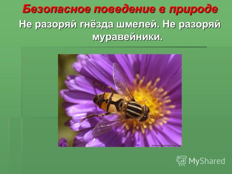 Безопасное поведение в природе Не разоряй гнёзда шмелей. Не разоряй муравейники.