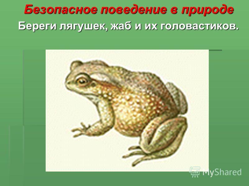 Безопасное поведение в природе Береги лягушек, жаб и их головастиков.