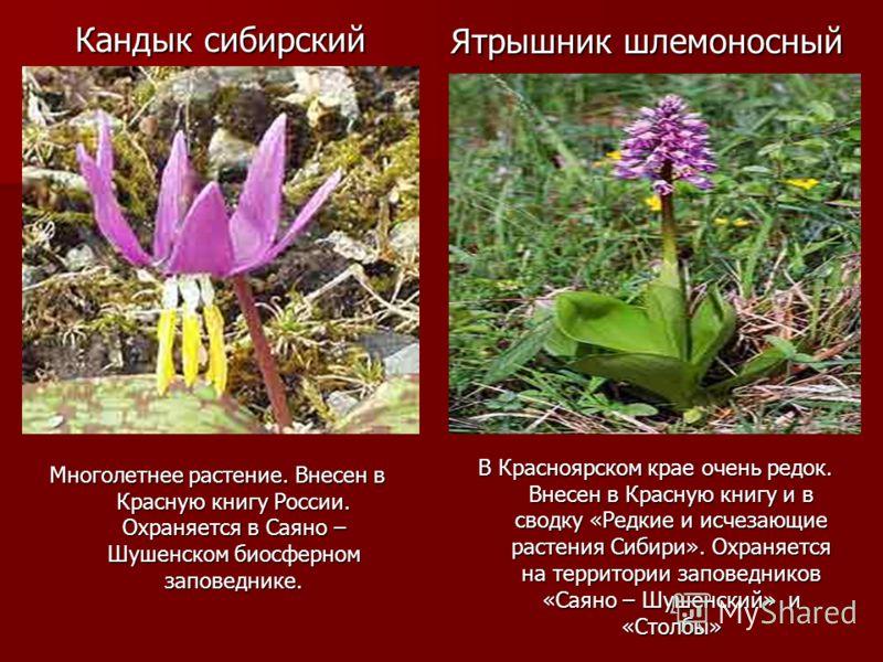 На тему растения красной книги