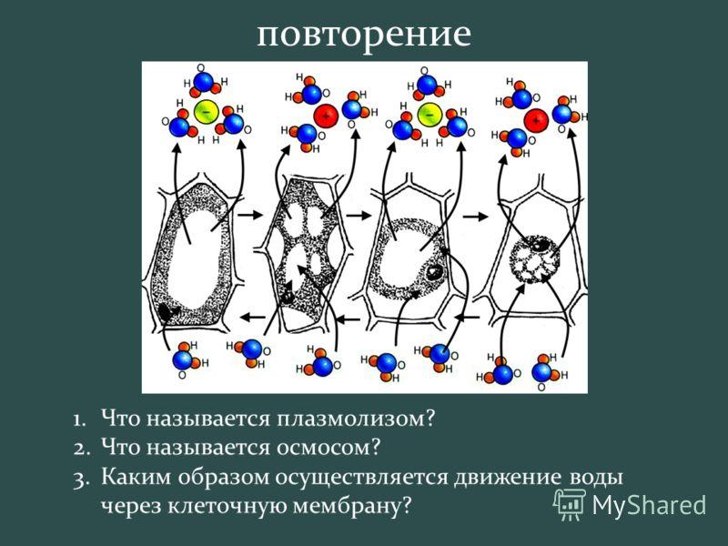 1.Что называется плазмолизом? 2.Что называется осмосом? 3.Каким образом осуществляется движение воды через клеточную мембрану? повторение